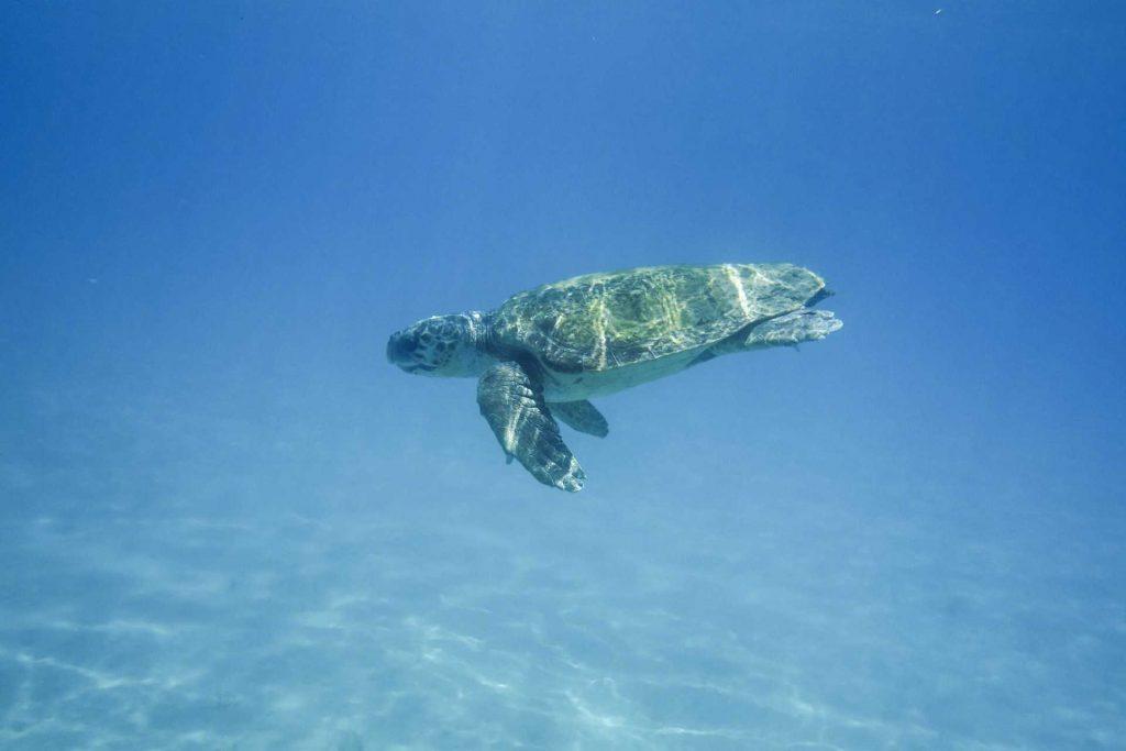 Zakynthos - żółw caretta carett